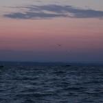 Morgen mit Fischer